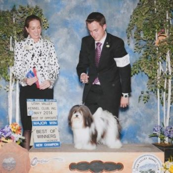 GCH Amor's Spoonful of Sugar | Havanese