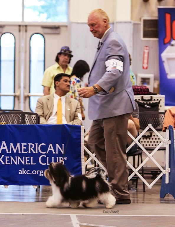GCH GCH Amor's 24kt the One and Only